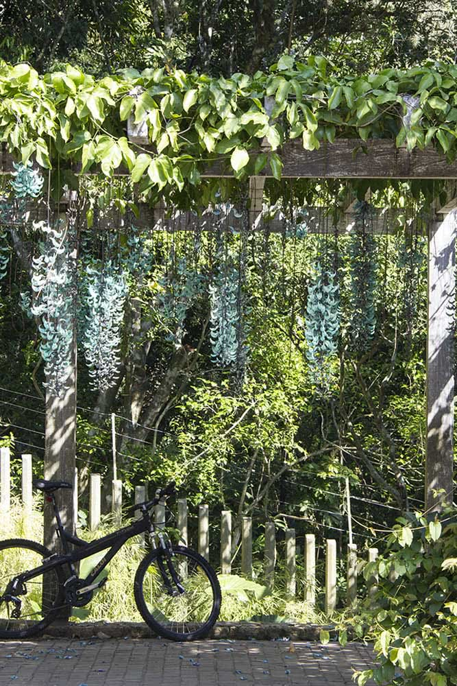 Como deixar a área externa da casa linda de viver? Com uma trepadeira jade!