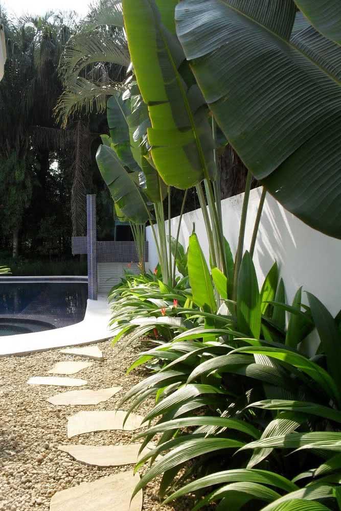 Helicônias no jardim da piscina