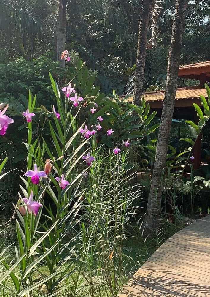Caminho rústico de orquídeas bambu em meio ao jardim