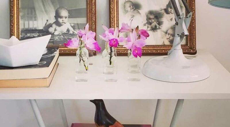 Orquídea bambu: como cuidar, características e fotos incríveis na decoração