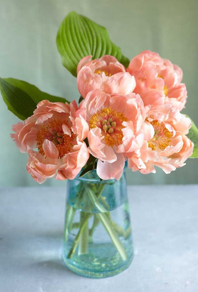 Vaso limpo, água fresca e luminosidade adequada é tudo o que as flores da peônia precisam para durarem mais