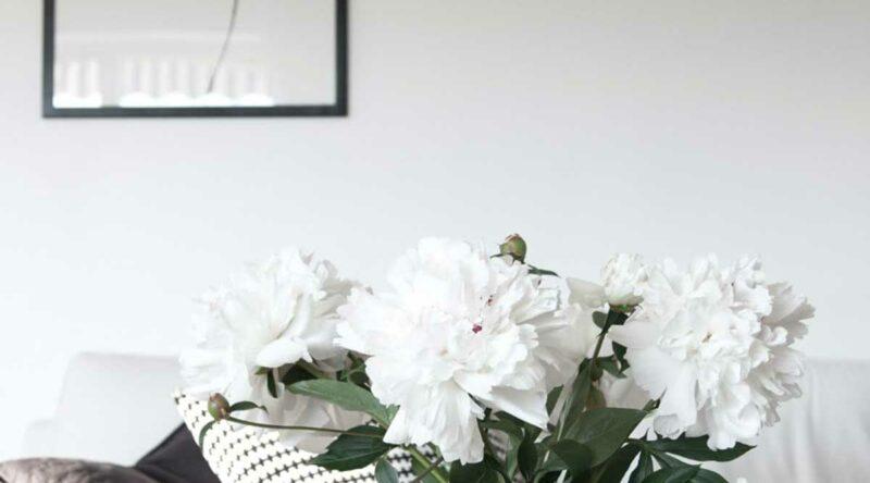 Peônia: características, como cuidar, significado e fotos para usar a planta