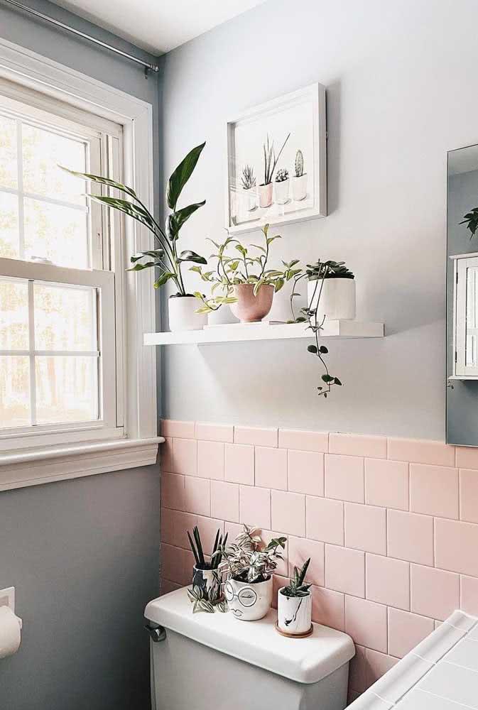 Tem luz no seu banheiro? A peperômia vai amar!