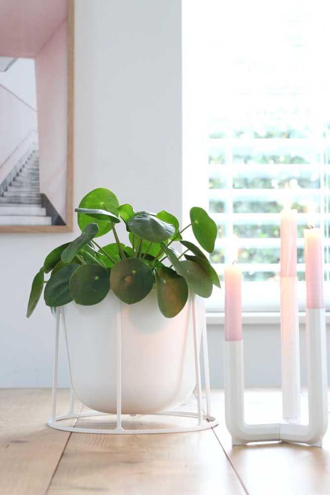 O vaso branco destaca o verde intenso da peperômia