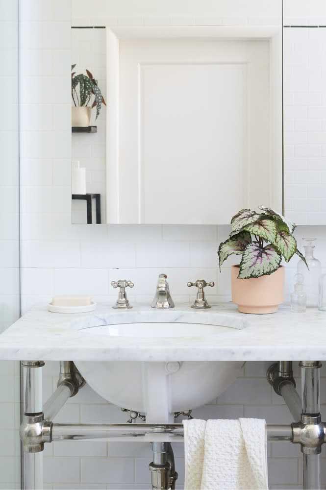 O banheiro branco ressalta a beleza da peperômia