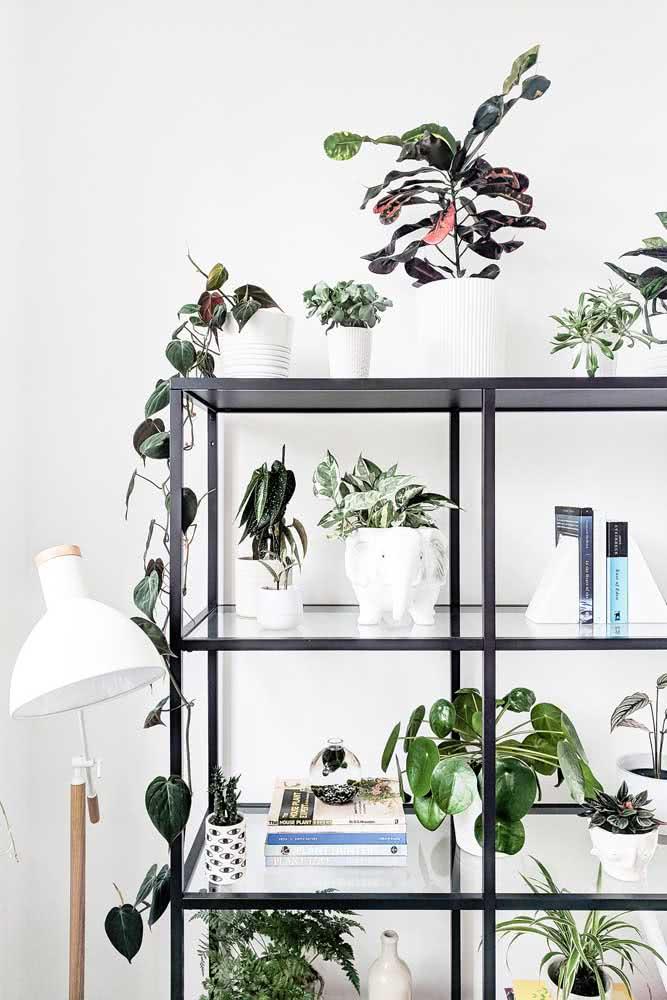 Brinque com a mistura entre a peperômia e outras espécies de plantas