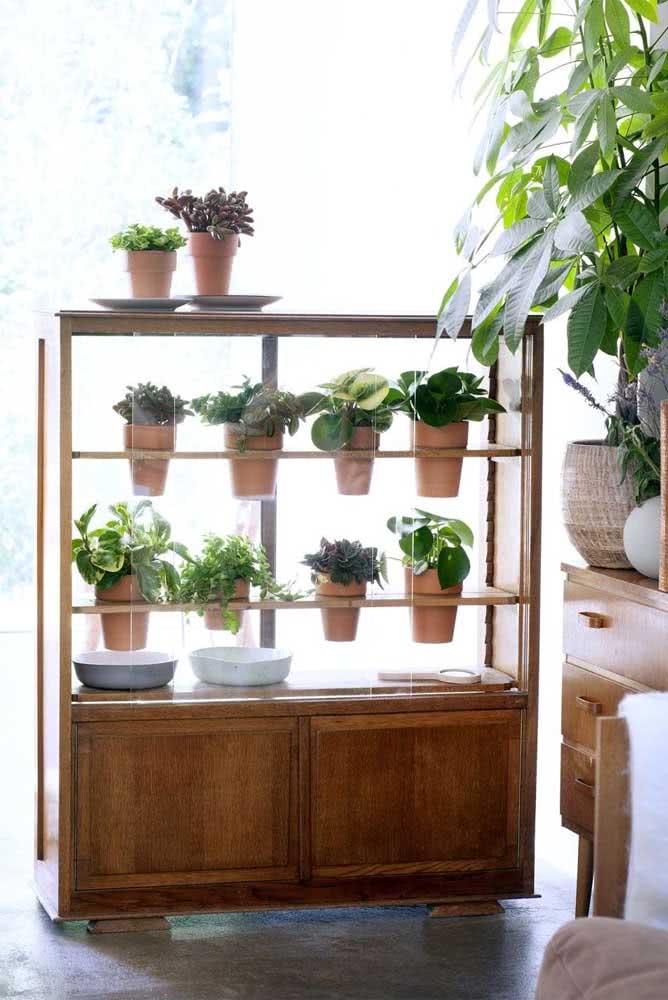 Uma coleção de peperômias na janela