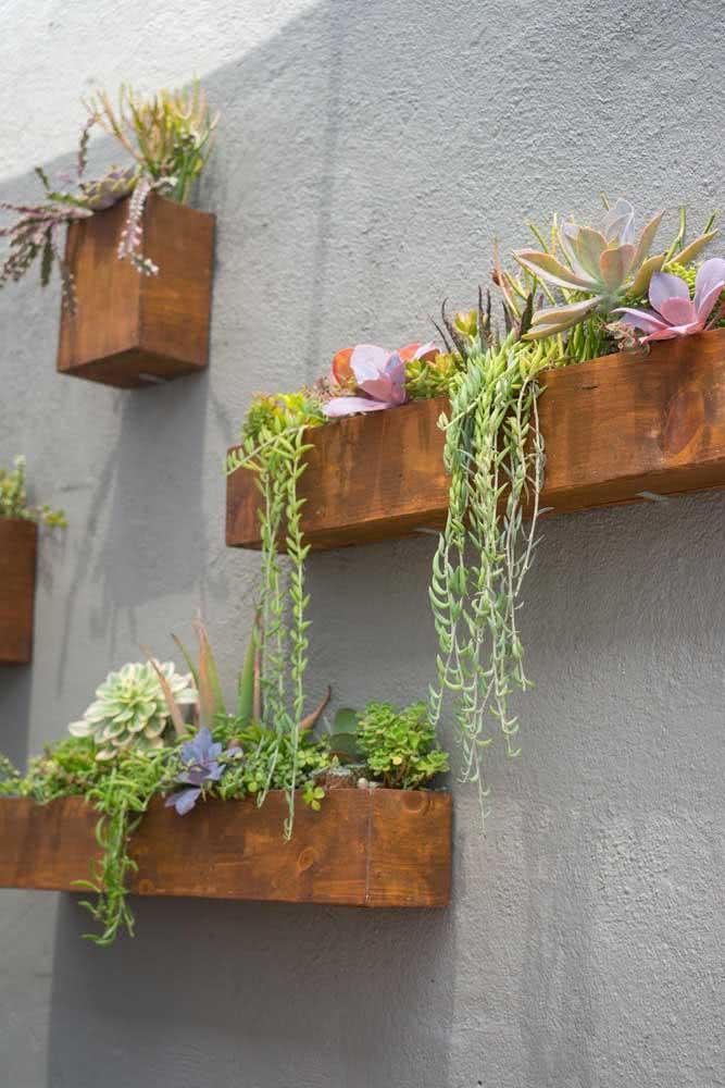 Cactos e suculentas para a floreira de parede externa