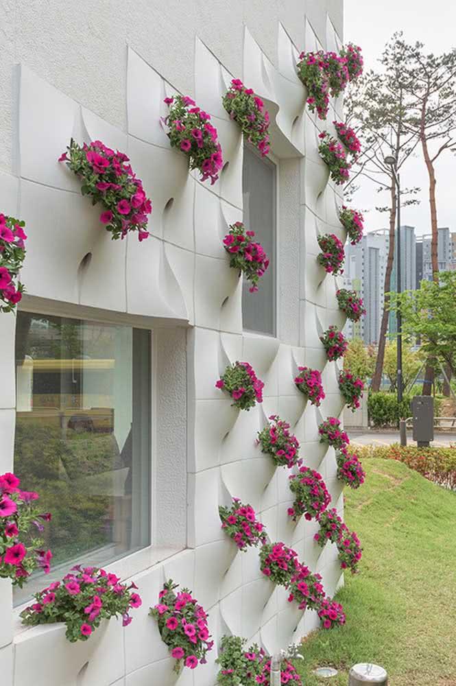 Floreiras de petúnias para decorar a fachada da casa