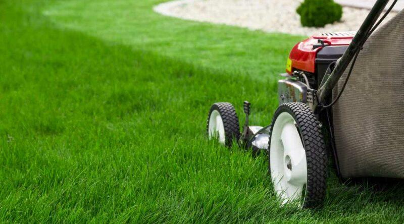 Ferramentas para jardinagem: conheça quais são as principais para você ter em casa