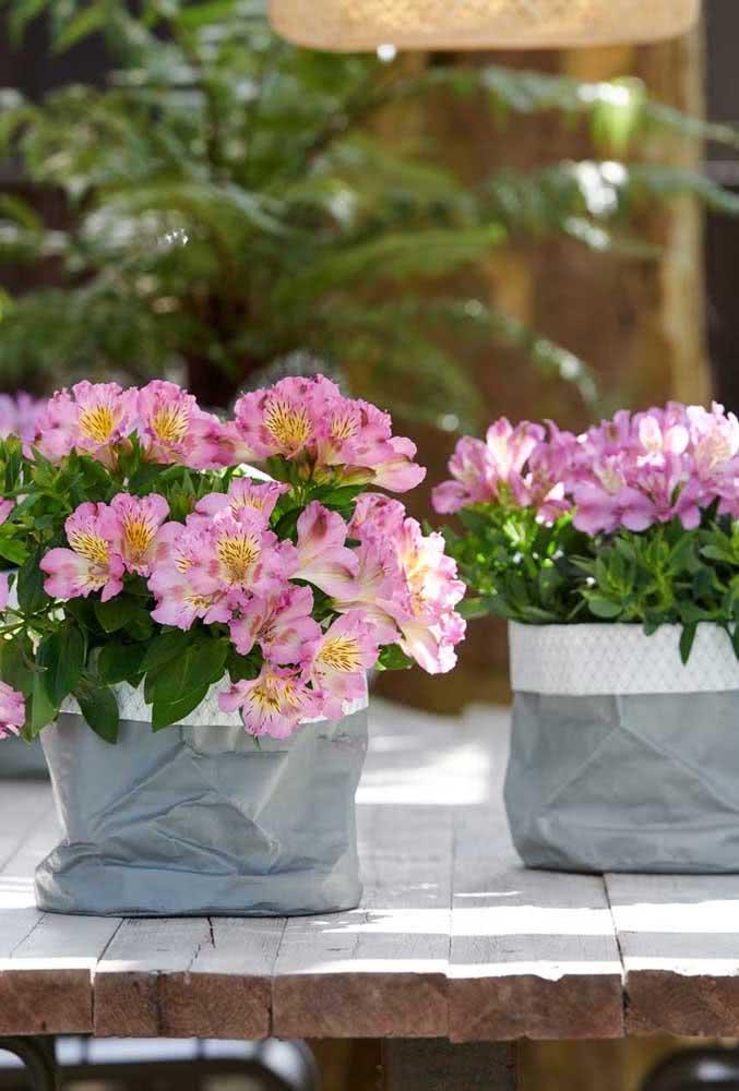 Astromélias plantadas no vaso garantem um charme extra à decoração