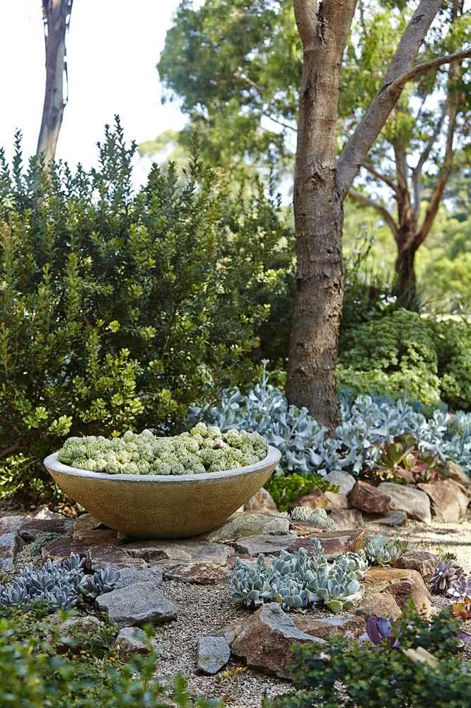 Jardim de suculentas no chão decorado com pedras. As árvores favorecem o cultivo de espécies de sombra
