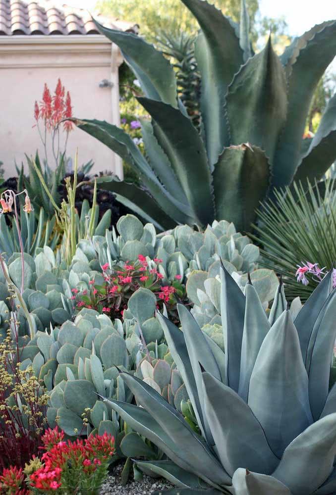 Organize o jardim de suculentas colocando as espécies maiores ao fundo e as menores na frente