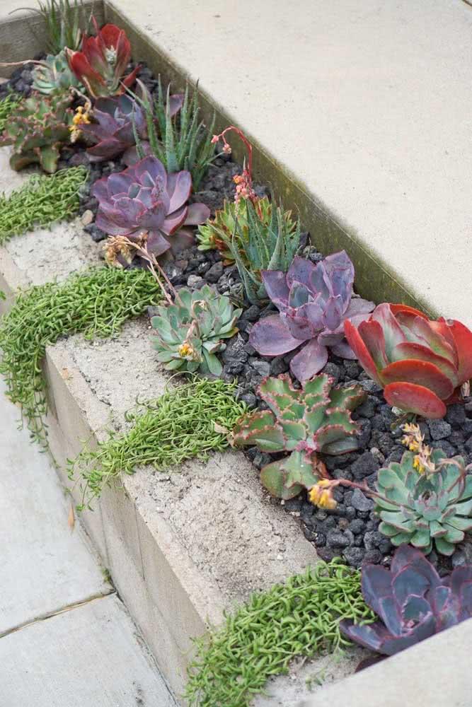 Já se a intenção é fazer um canteiro mais alto, basta enfileirar alguns blocos e plantar suas suculentas preferidas