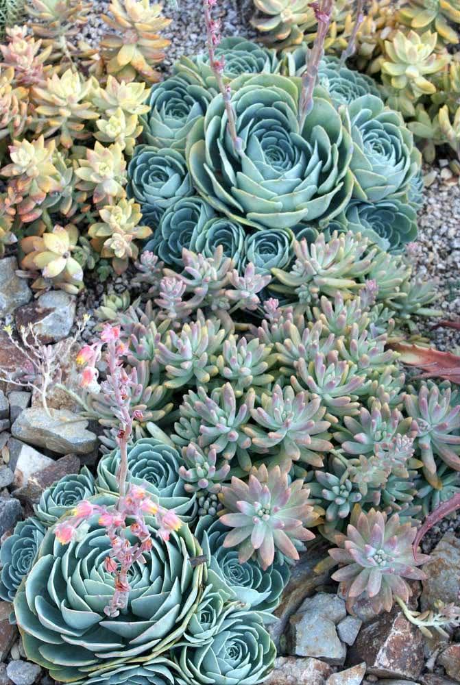Jardim de suculentas em tons de azul e verde