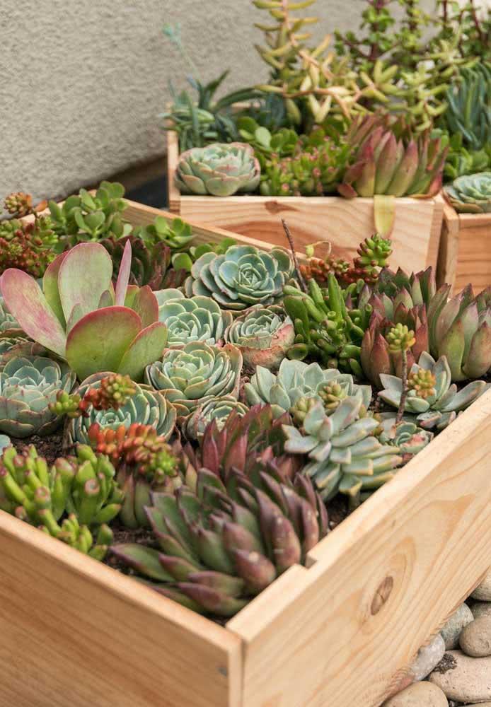 Um caixote de madeira pode se transformar em um lindo jardim de suculentas
