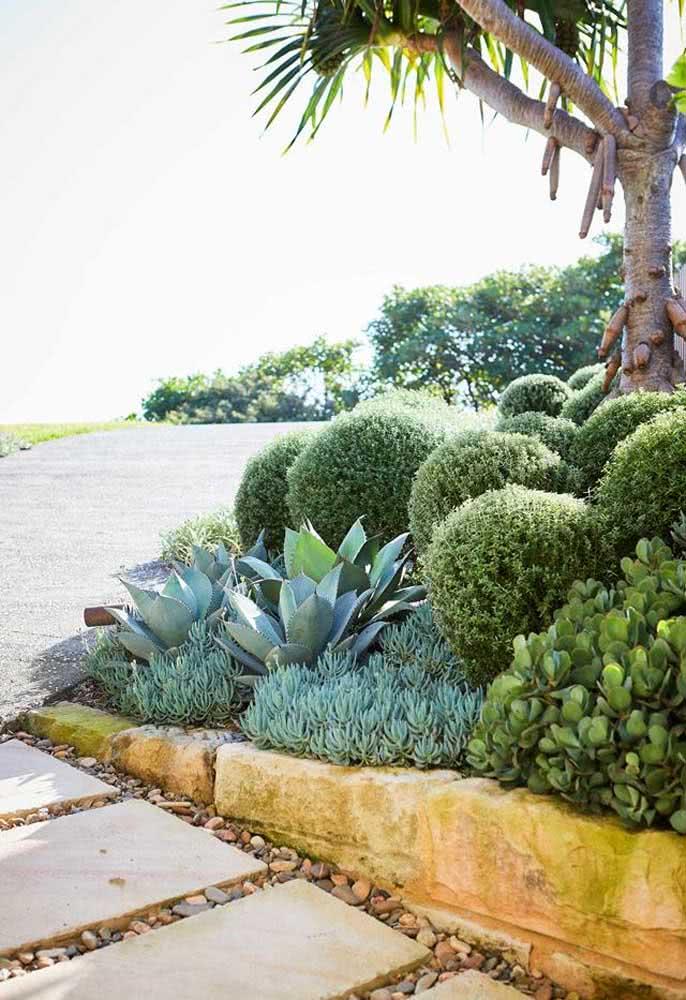 Destaque o jardim de suculentas com pedras e cores vivas