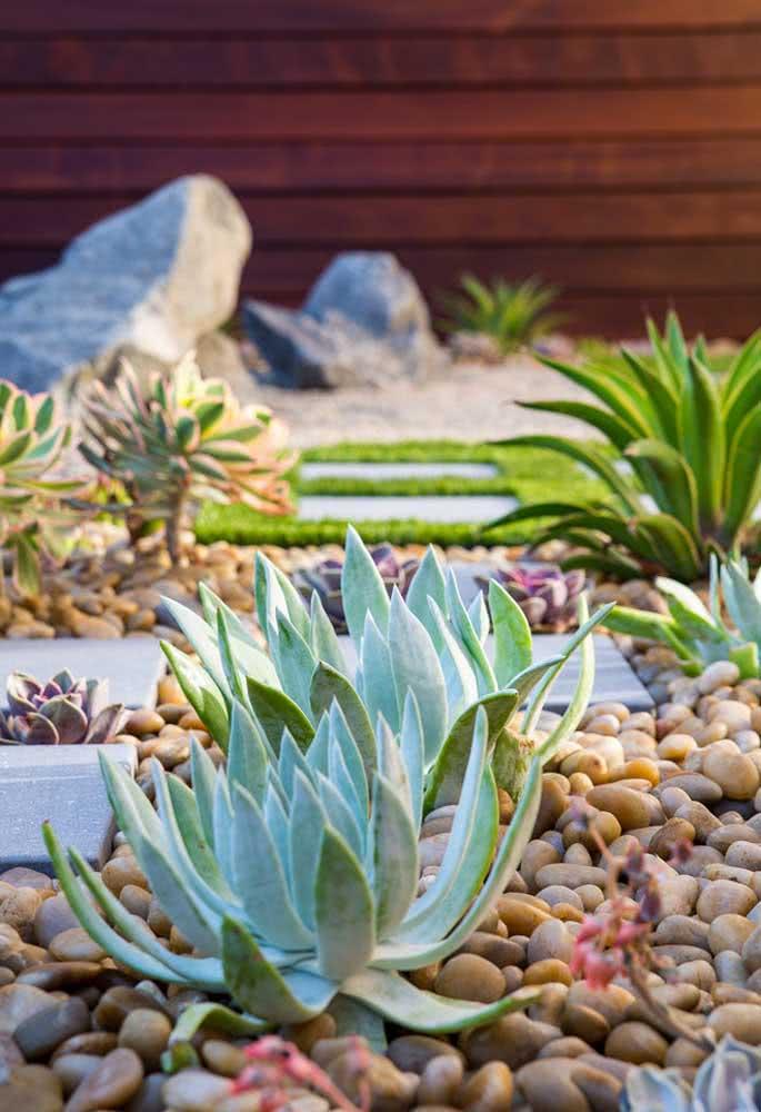 Pouca água e muito sol! O segredo para um jardim de suculentas sempre bonito