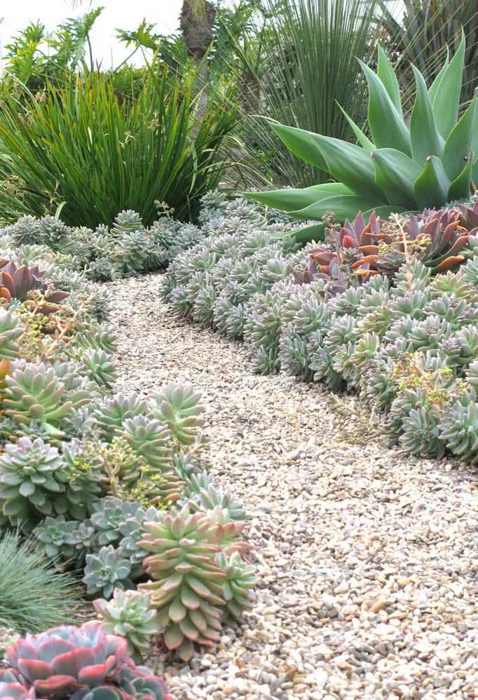 Faça um caminho no jardim de suculentas para desfrutar melhor desse espaço