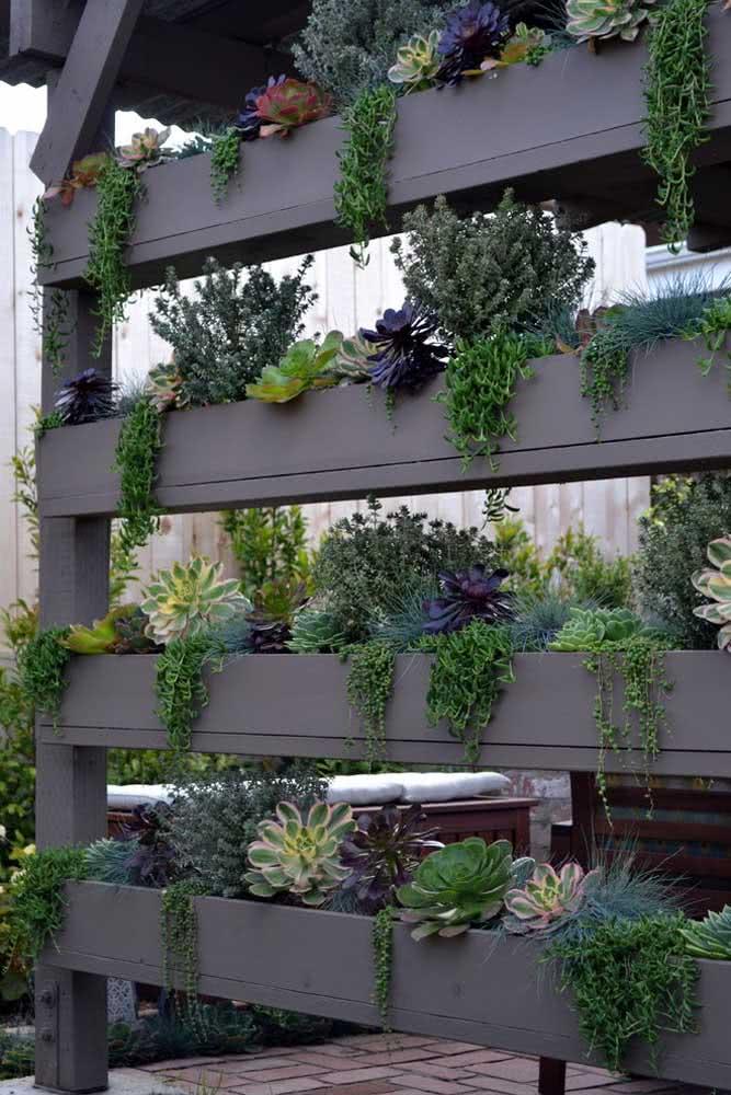 Jardim vertical de suculentas. As espécies pendentes são ótimas opções por aqui