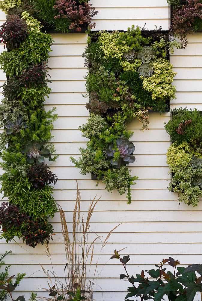 Jardim vertical de suculentas: ideal para quem tem pouco espaço