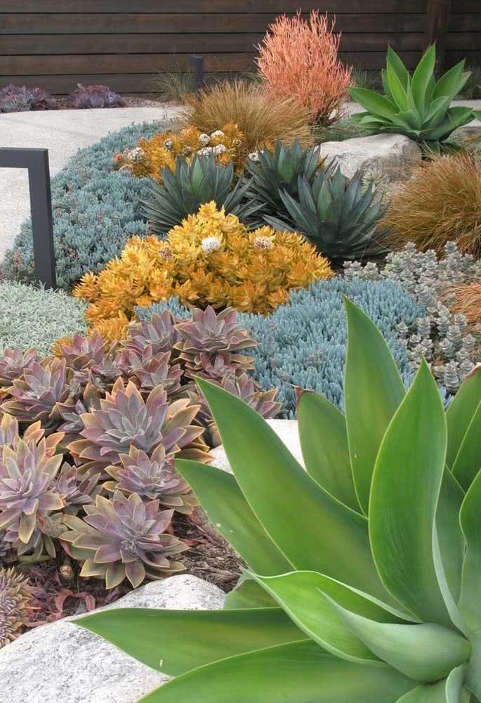 Agrupe as espécies iguais de suculentas para um jardim mais harmonioso