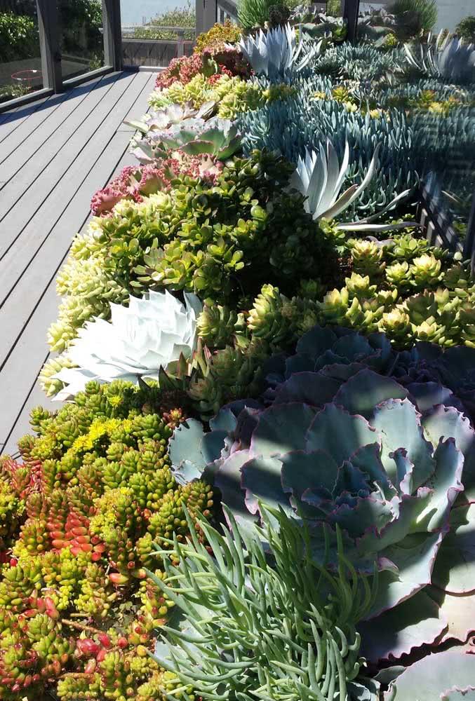 Mais de duas mil espécies diferentes de suculentas para você escolher e montar o seu jardim