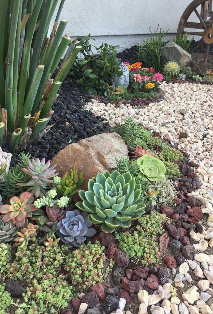 As suculentas crescem muito bem em meio as pedras