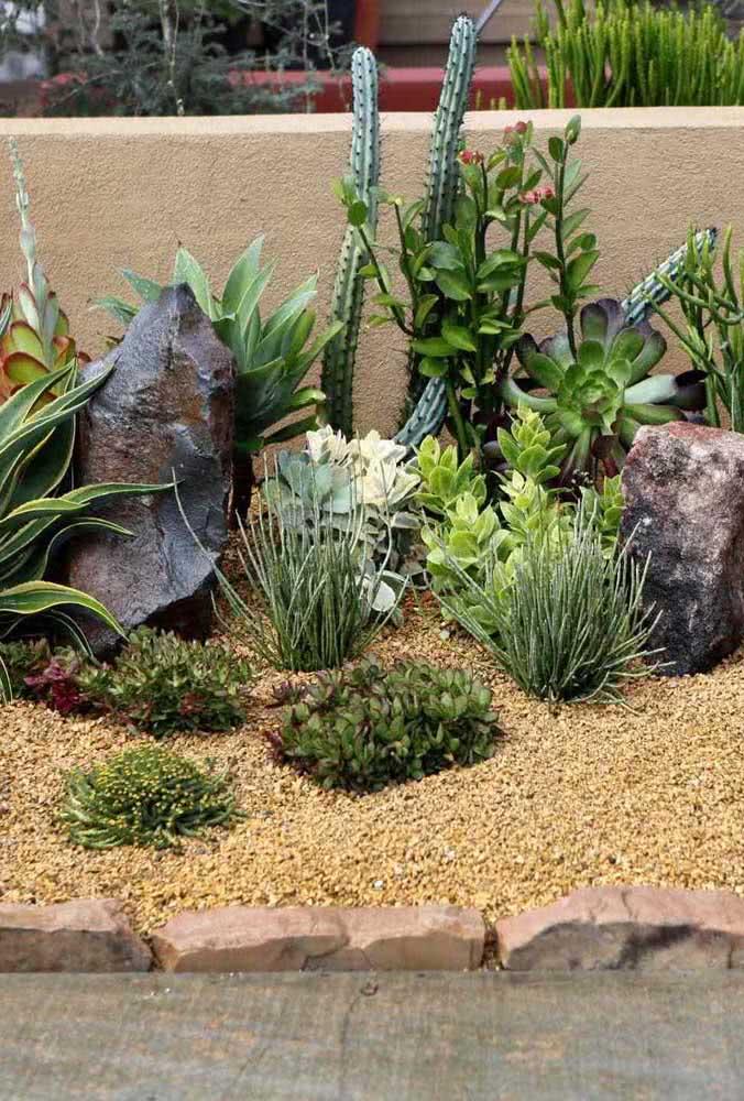 Cactos, suculentas e pedras para um jardim de estilo desértico e rústico