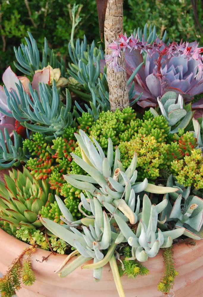 Mix de cores e texturas para o jardim de suculentas no vaso