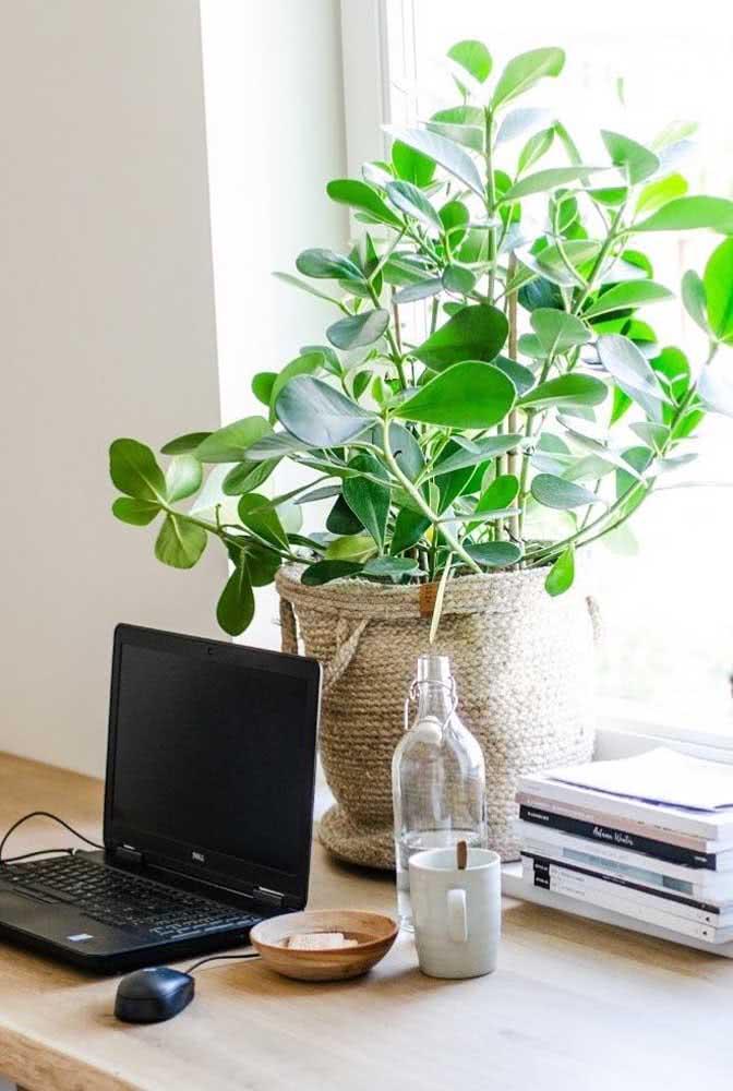 E o que acha de trabalhar em companhia de um vaso cheio e lindo de clúsia?