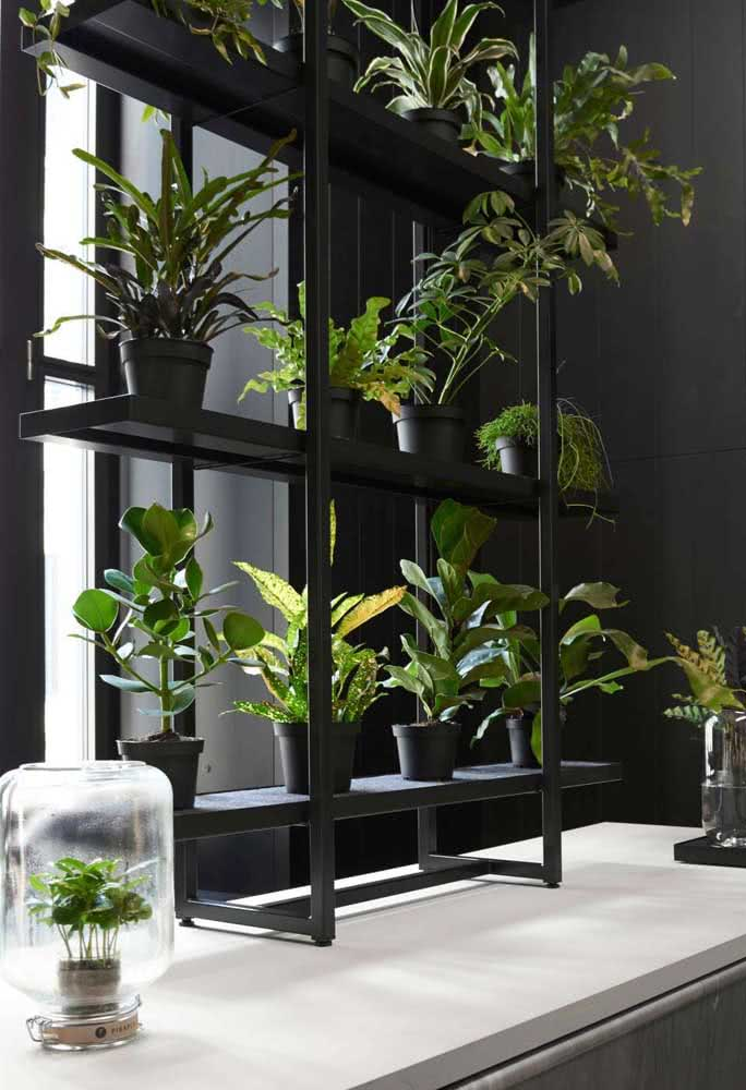 Jardim vertical na janela com espécies variadas de folhagens, incluindo a clúsia