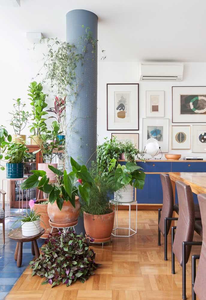 A clúsia é uma ótima opção de planta para criar volume na urban jungle