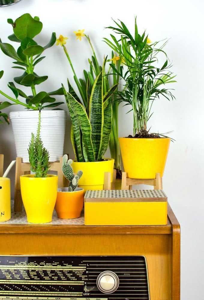 Uma linda composição de vasos brancos e amarelos destacando as folhagens da clúsia e das outras plantinhas