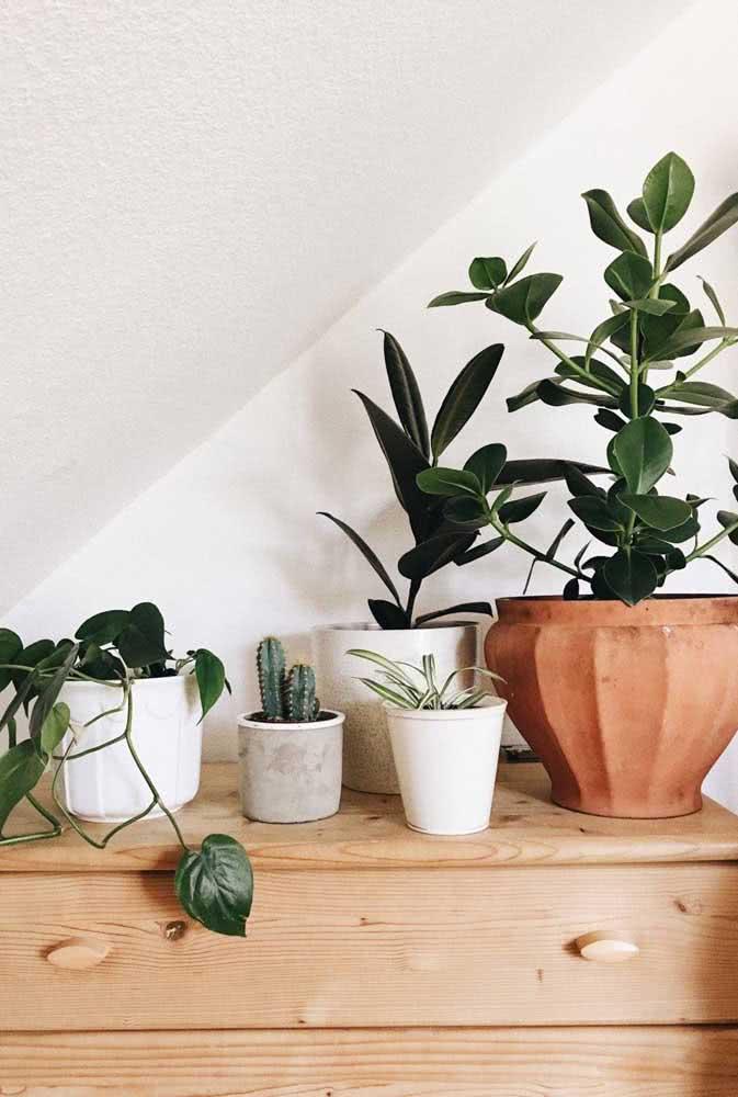 Sabe aquela cômoda sem graça? Encha-a de plantas. A clúsia é uma boa pedida!