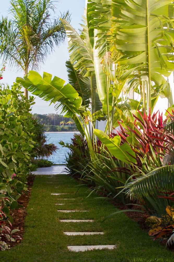Jardim tropical de clúsia, bananeiras e outras espécies brasileiríssimas