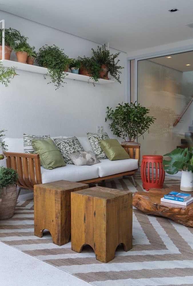 Vaso de clúsia na sala de estar. Lembra a planta jade, mas só na aparência. Os cuidados são bem diferentes