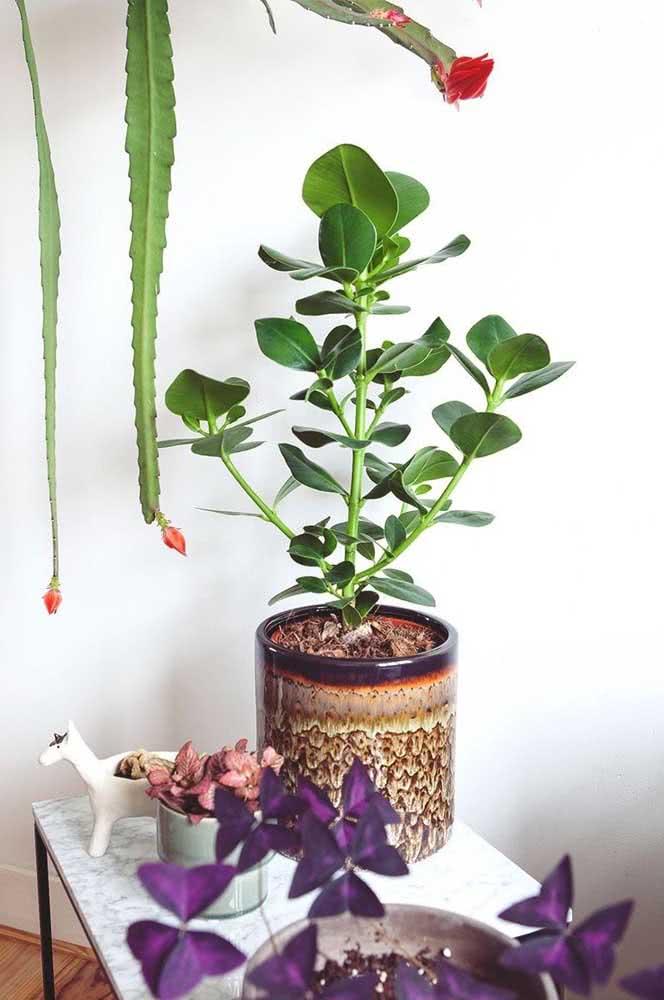 Vai plantar clúsia no vaso? Então escolha um modelo bem bonito para valorizar a planta