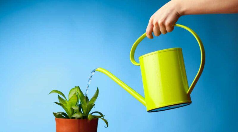 Jardinagem para iniciantes: conheça 11 dicas para você começar agora mesmo