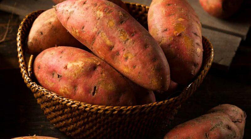 Como plantar batata doce: conheça 3 formas para cultivar o tubérculo