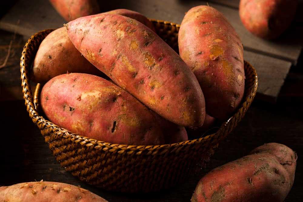 Como plantar batata doce no vaso