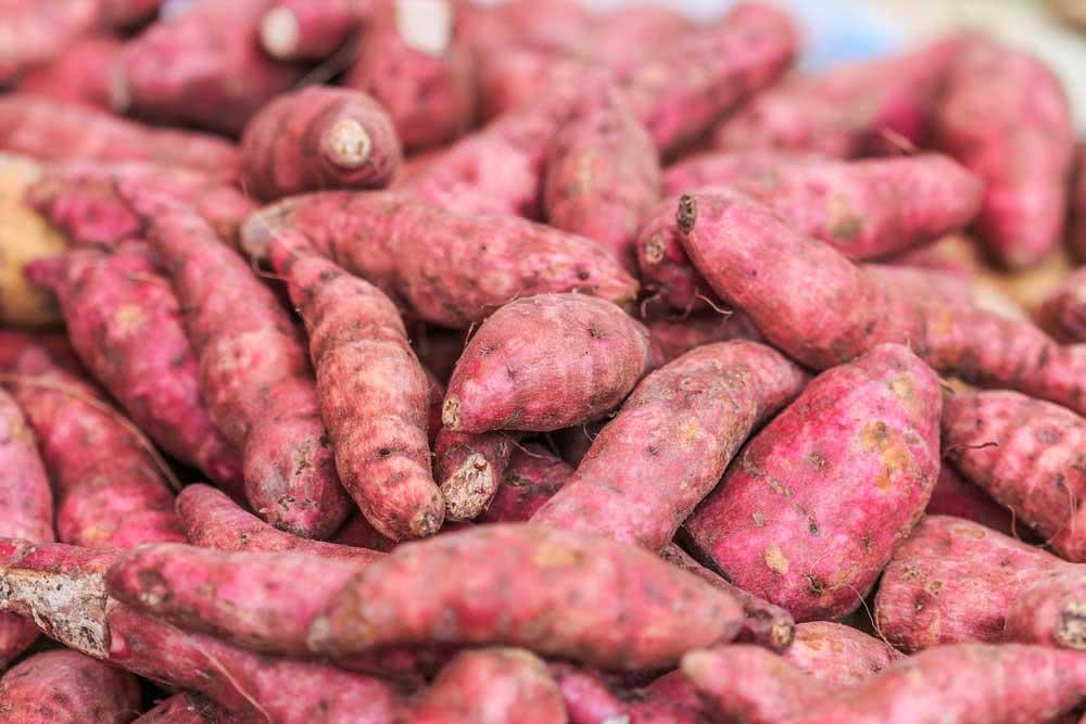 Como plantar batata doce: aprenda a fazer uma muda