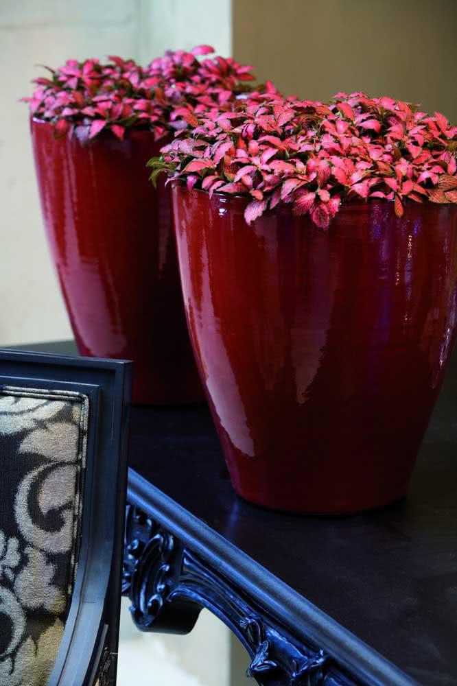 Fitônia vermelha para combinar com os vasos da mesma cor