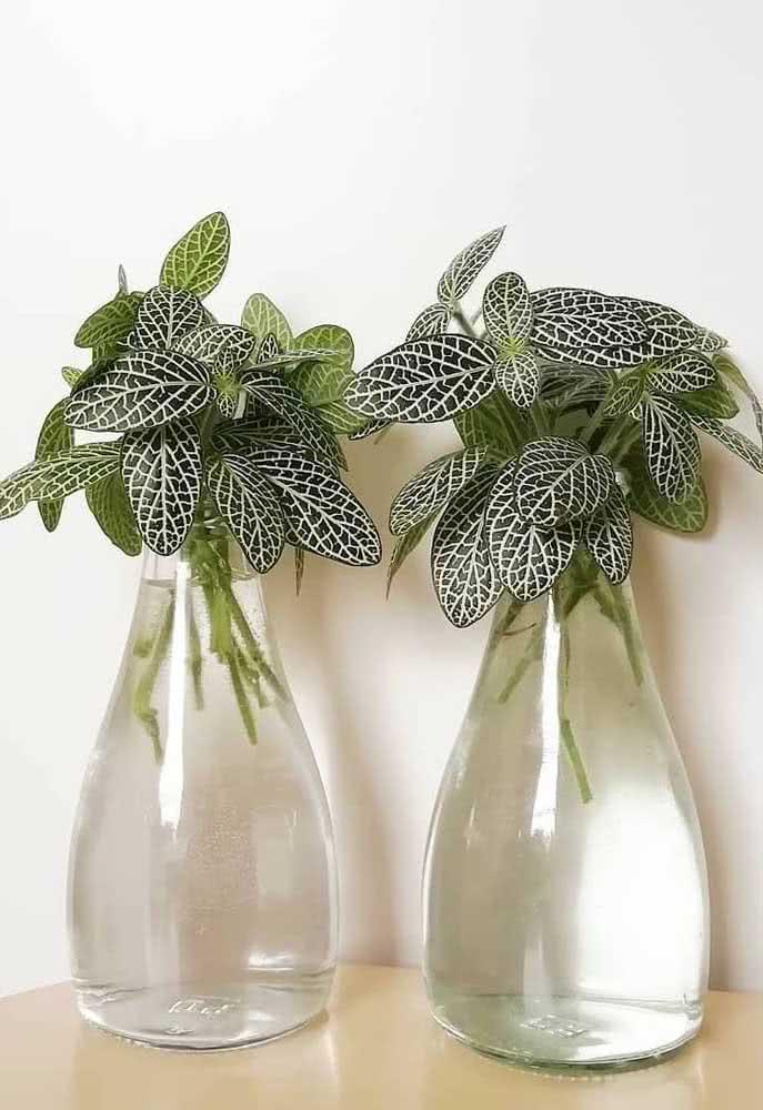 Vaso de fitônias verdes e brancas. Uma composição elegantemente simples