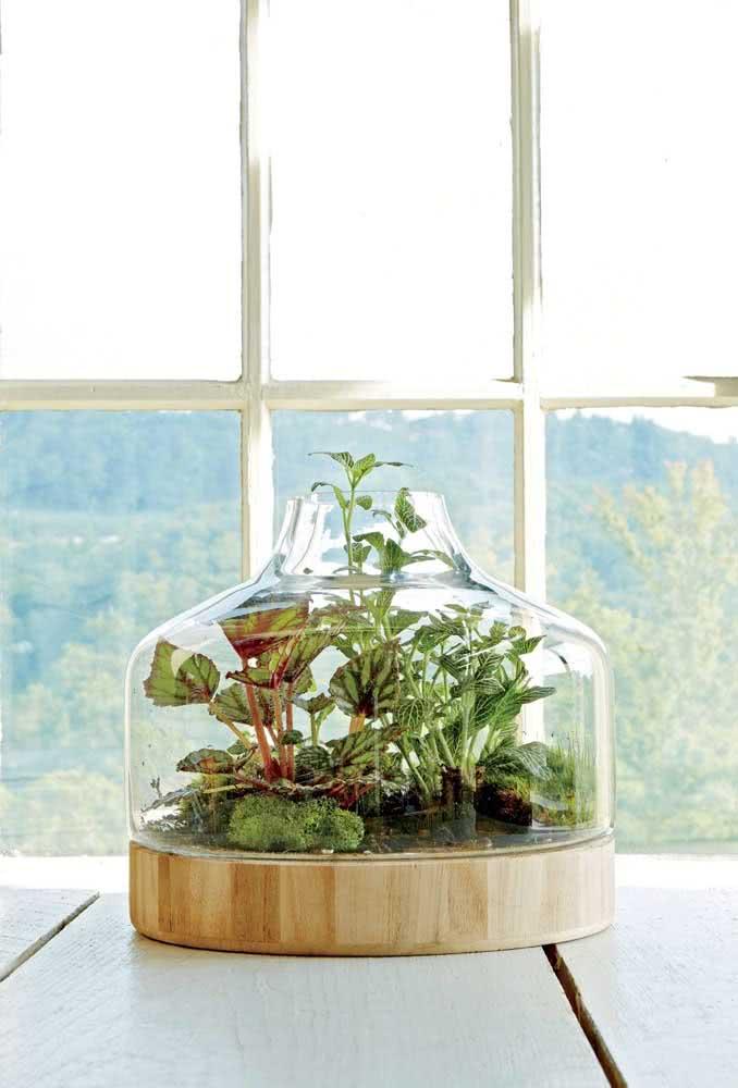 Um terrário com fitônias e outras espécies curtindo a luz que vem da janela