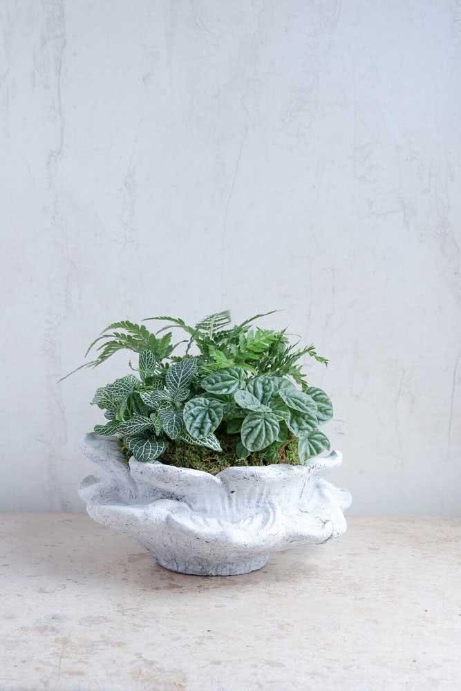 Que tal plantar em um mesmo vaso fitônia, peperômia e mini samambaia?