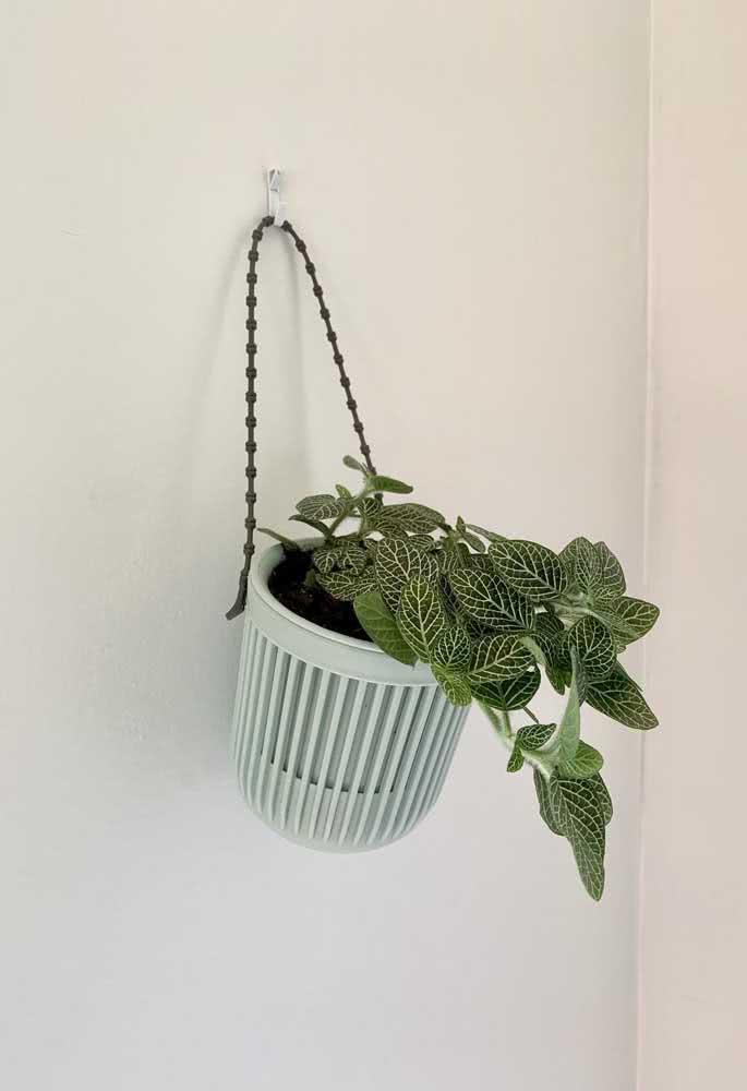 Fitônia pendente para quem deseja um jeito diferente de usar a planta na decoração