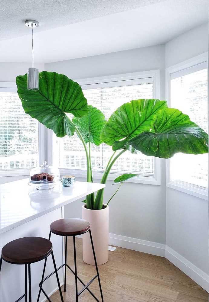 Para quem aprecia plantas em versões gigantes