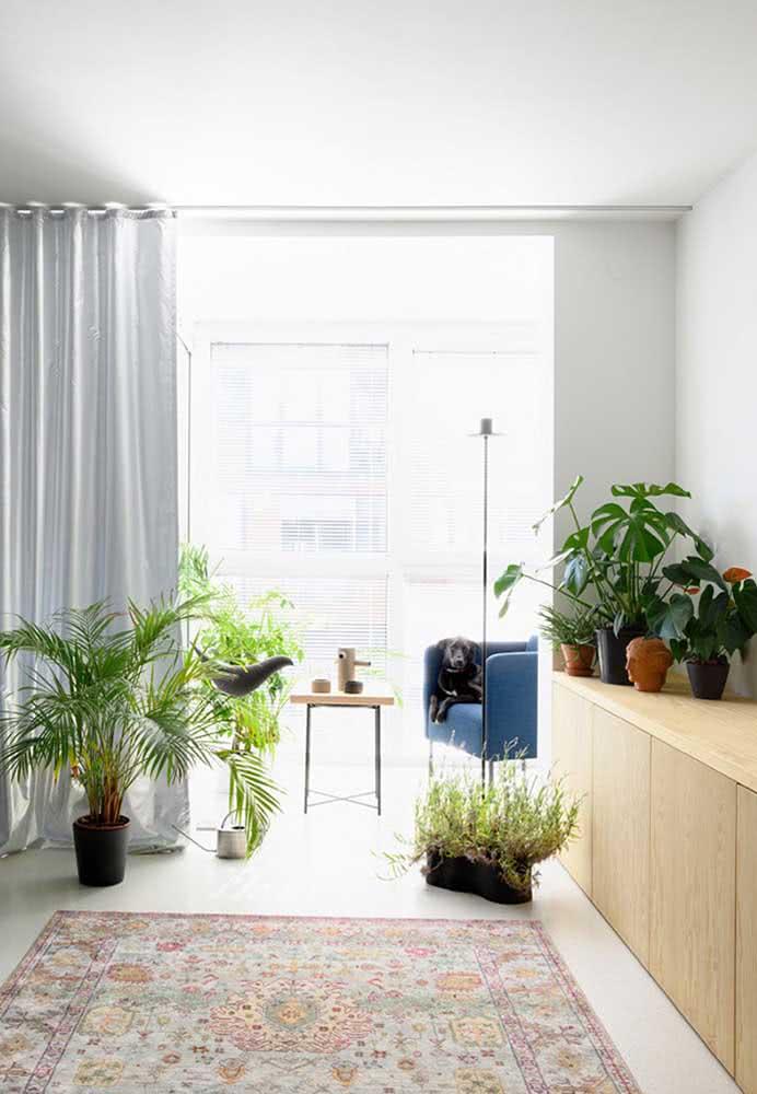 Urban jungle na sala com Alocásias, palmeiras e costelas de adão
