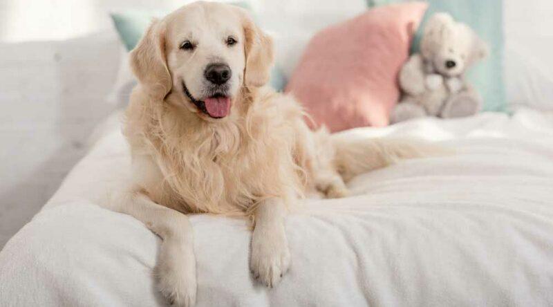 Criar cachorro em apartamento: os principais cuidados e 6 dicas essenciais para seguir